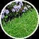 artificial grass case study