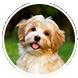 Dog Friendly Benefits of Artifical Grass