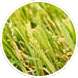 artificial grass child friendly