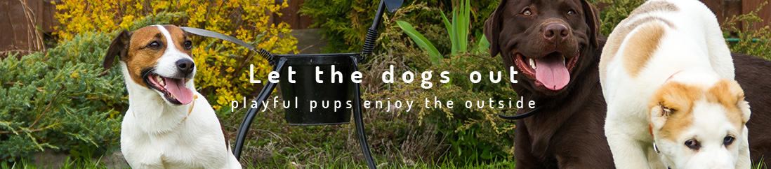 Let The Dogs Out artificial grass