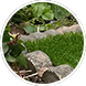 artificial grass supply and fit