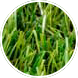 Where to Lay Artificial Grass