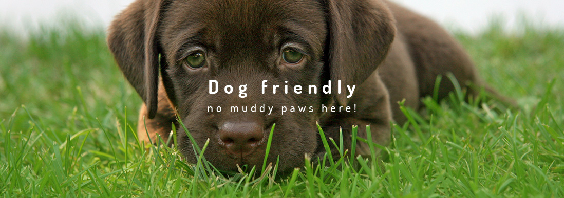 Pet Friendly Artificial Lawns and Grass