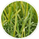 A close-up shot of some artificial grass